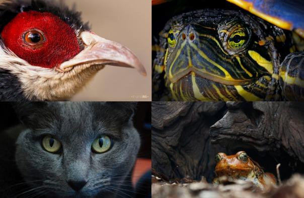 animales ojos