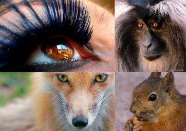 ojos animales2
