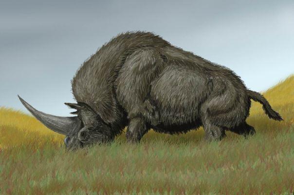 Recreación de un Elasmotherium. Nótese el inmenso cuerno. Imagen de DiBgd en Wikimedia Commons.