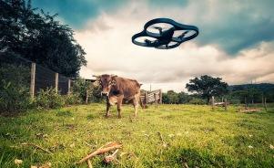 dron vaca