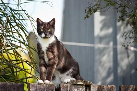 Detrás de esa elegancia y majestuosidad que tienen les gatos, se esconde un terrible depredador, como todo buen felino. Aunque mucha gente no se da cuenta. Fotografía de skepticalview. https://www.flickr.com/photos/castorgirl/6110804384/