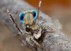 Si ver ratas suele dar asco, ¿os imagináis una ciudad llena de arañas? Si son así de bonitas y pequeñas, yo tampoco diría que no, pero quizá sería el único. Fotografía de Jurgen Otto. https://www.flickr.com/photos/59431731@N05/5470432924/