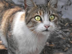 ¿Verdad que sería una película de ciencia ficción poco creíble una que explicara un apocalipsis provocado por un gato como este? Fotografía de Jaime Herrera Espinosa. https://www.flickr.com/photos/jaimelex/3145858289/