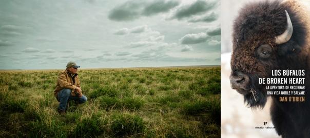 A la izquierda, fotografía de Dan O'Brien en su rancho de Dakota del Sur, sacada de la web de su empresa de comercialización de carne de búfalo Wild Idea Buffalo (http://wildideabuffalo.com/). A la derecha, portada del libro, sacada de la editorial que lo ha traducido, Errata naturae (http://erratanaturae.com/libro/los-bufalos-de-broken-heart/).
