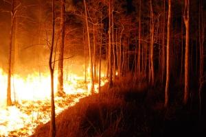 Un ejemplo de grandes incendios son los que ocurren en California, donde se queman miles y miles de hectáreas, así como numerosas casas. Esta foto pertenece a un incendio en Florida. Fotografía de la US Fish and Wildlife Service Southeast Region. https://www.flickr.com/photos/usfwssoutheast/4971831248/