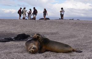 leones marinos islas galapagos turismo biodiversidad conservación
