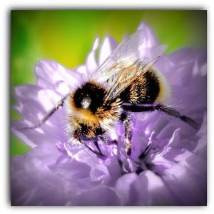relación trófica entre abeja y flor