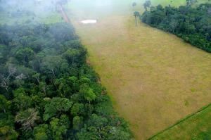 impacto deforestación