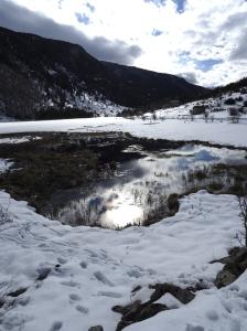 huellas corzo nieve