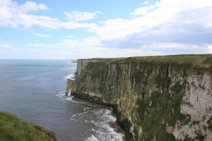 bempton cliffs reserva natural
