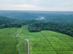 deforestación crimen naturaleza
