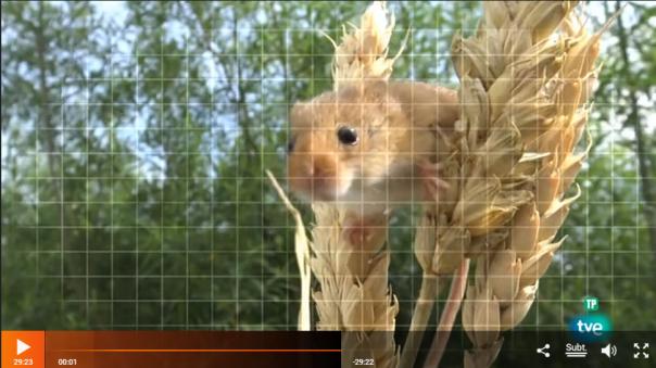 qué animal televisión