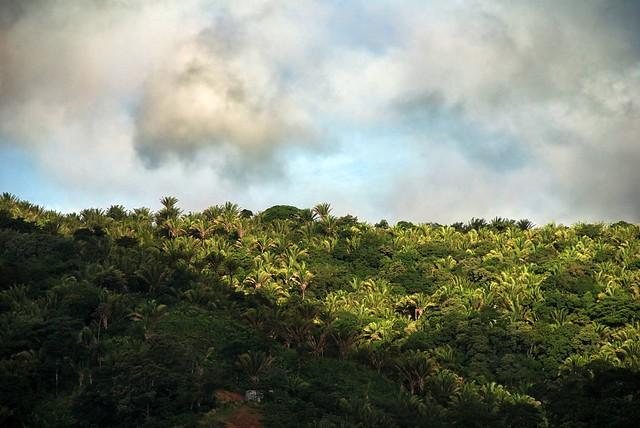 ecosistema red relación especies